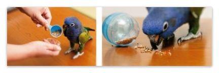 ガチャガチャのボールにエサをいれてもフォージングになります。