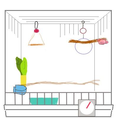 水浴び容器は糞などが入らないで安定して置ける場所がベスト