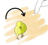 指を使ってインコの頭の上でターンを指示します。