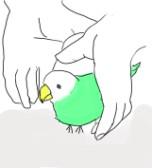 両手を使ってトンネルをつくり、インコをくぐらせます。