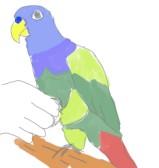 インコが片足を飼い主の指に乗せたら「握手」といって、これが握手であることを覚えさせます。